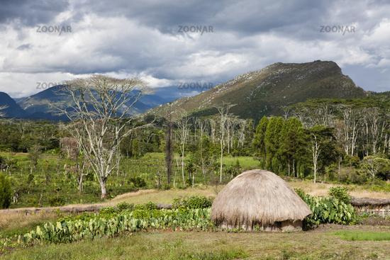 Typisches Dani Dorf im Baliem Tal
