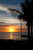 Mauritius Sunset with palm leafs