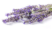 Lavender flower bouquet on a white background. Aromatic herb