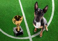soccer player dog