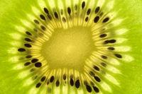 Kiwi, Actinidia deliciosa