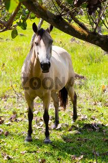 Panama Dolega, horse watching in camera