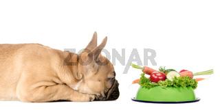 Hund mit Fressnapf voll Gemüse