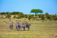 Kenya in the spring
