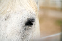 Close up of the eye of a single horse on a farm