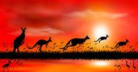 Kangaroo at sunset by the lake