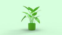 3D rendering of a exotic household houseplant isolated on studio background.