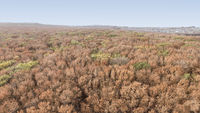 Aerial top down view of autumn forest with green and yellow trees. City Park. Stavropol. Caucasus.