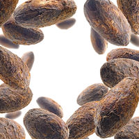 Cocoa beans levitate on a white background