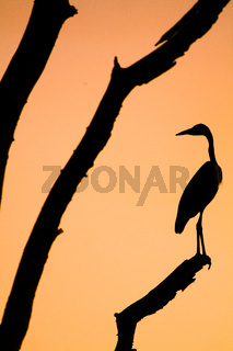 A silhouette of a heron