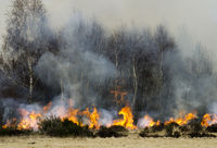 Slash-and-burn in the heathlands by Drove, Germany