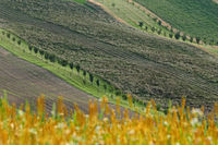 Strips with fruit trees as protection against soilt erosion, South Moravia, Czech republic