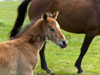Young Horse Foal