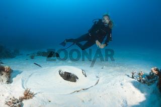 Schwarzpunkt-Stachelrochen gertarnt im Sand, Malediven