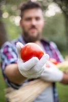 Farmer holds freshly picked tomato