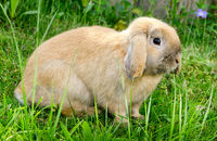 bunny sits in grass