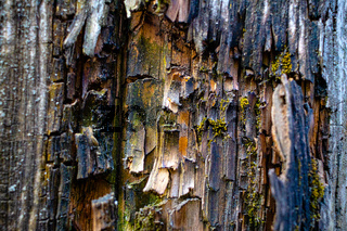 It's the texture of old cracked wood close-up. Wood treatment protection against aging and termites.