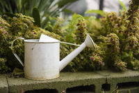 White antique watering can beside plant in garden