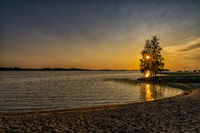 Colorful sunset over a calm ocean with a sandy beach in the foreground and the setting sun shining through a tree