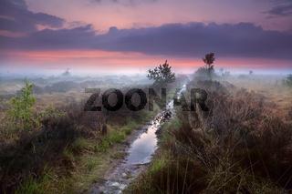 wet narrow path in fog