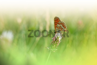 Beautiful Green Nature Background.Floral Art Design.Macro Photography.Floral abstract pastel photo.