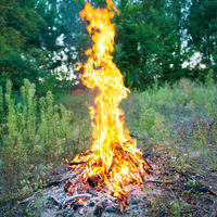 Bonfire in the forest