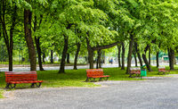 Green city park with road trees