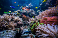 Underwater view of the coral reef