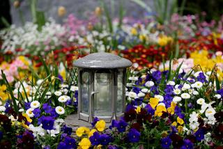 Grablaterne auf einem Grab voller bunter Frühlingsblumen