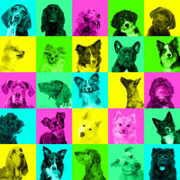 Collage of dog portraits bright facial expression