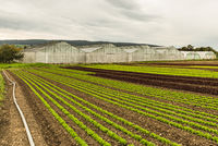 Lettuce field and greenhouses, Reichenau Island, Lake Constance, Baden-Wuerttemberg, Germany