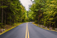 Empty road amidst trees in forest, Acadia National Park, Maine