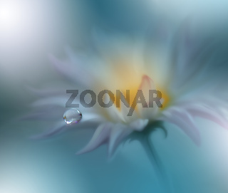 Beautiful Nature Background.Floral Art Design.Abstract Macro Photography.
