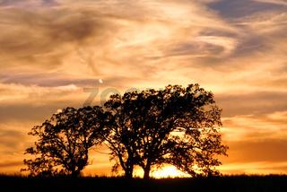 Jarrett Prairie Nature Preserve Sunset