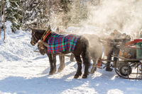 Horse drawn carriage in winter: Steam in the morning sun, Austria