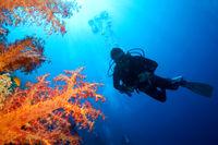 Coral Reef, Scuba Diver, Red Sea, Egypt