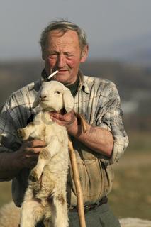 Sein jüngstes Schaf