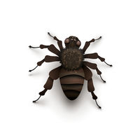 Detailed realistic spider on white