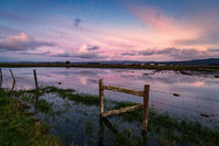 Color image of a fence in a flooded field at sunset.