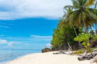 The Togian Island Taupan in Sulawesi