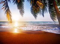 Beautiful tropical beach and leaves of coconut palm trees at sunset time