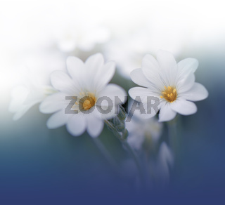 Beautiful Blue Nature Background.Floral Art Design.Abstract Macro Photography.Colorful Flower.Bloom
