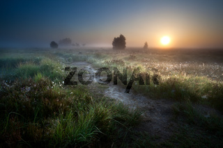 misty sunrise over countryside path
