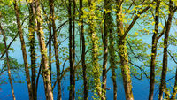 A backdrop of green springtime trees with a vibrant blue river behind