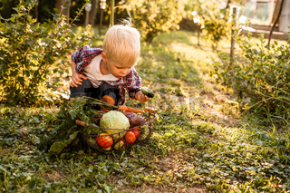 The toddler examines a basket of vegetables