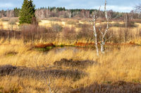 Swamp landscape in the High Fens