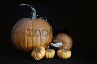 Pumpkins  with gourds on black background