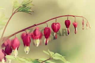 Frühlings Herzen