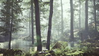 Forest with pond and mist with sunrays