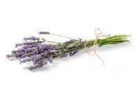 Lavender flower bouquet on a white background, lavandula
